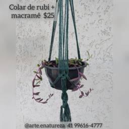 Suculentas pendentes + macramê