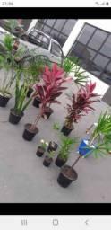 Temos variedades de mudas de plantas!