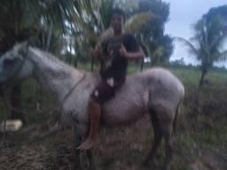 Vende-se  uma  égua  1.700
