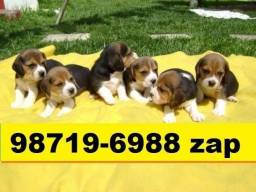 Cães Filhotes Maravilhosos Beagle Lhasa Yorkshire Basset Shihtzu Maltês