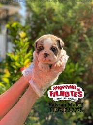 Bulldog Inglês, filhotinhos com garantias toais em com contrato e pedigree