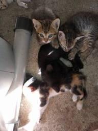 Doa-se gatinhos doação responsável