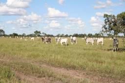 Fazenda na regiao do paiuaguas,corumba,ms