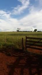 Fazenda 265 Alqueires em Quirinopolis
