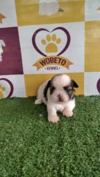 Shih Tzu Kennel Wobeto