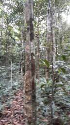 300 hectares de terra por 65.mil reais