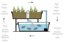 Curso Produção de Peixes e Hortaliças no Sistema de Aquaponia