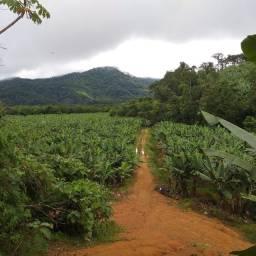 Sítio 12 Produção de Banana (Willian Ricardo)
