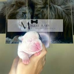 Filhotes disponíveis Bulldog francês