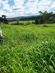 Fazenda 1.960 há (405 alq) pecuária extensiva de cria recria e engorda