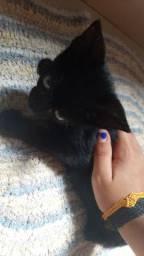 Doações de gatinhos