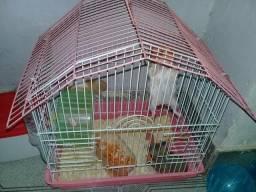 Hamster Sítios