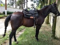 Cavalo Marchador barato