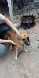 Adoção - Cão Filhote Macho - Grande Porte