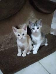 Adoção responsável gatos