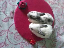 Vemdo filhotes de coelhos netherlamd