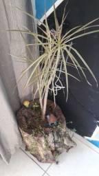 Vaso rustuco com plantas vivas