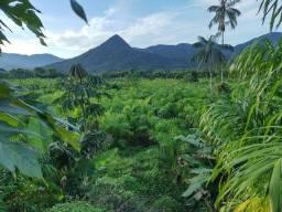 Sítio 46 hectares Produção de Banana (Willian Ricardo)