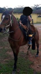 Vendo ou troco cavalo + montaria 4 anos
