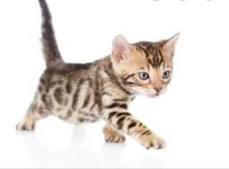 Procuro filhotes de gato para doar