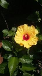 Floricultura da Luiza - Paraíso do Tocantins