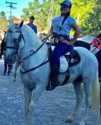 Vendo ou troco Cavalo Russo