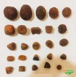 Compro pedra de fel Bovino