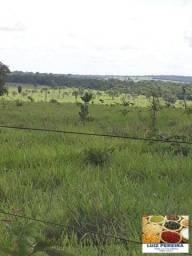 FAZENDA À VENDA EM TRÊS LAGOAS - MS - DE 1.400 ALQUEIRES (Pecuária)