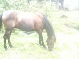 Vende un cavalo