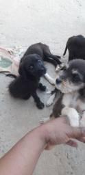 Doando 5 cachorrinhos lindos,ótimo pra vigiar casa.