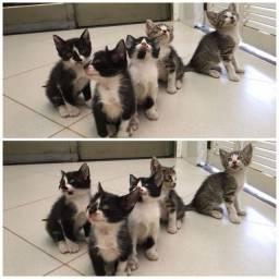 Doa-se gatinho filhote