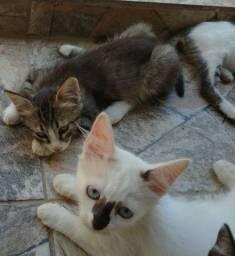 Gatos para doações