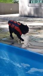 Colete salva vidas cachorro cães raça pequena - leia o anúncio