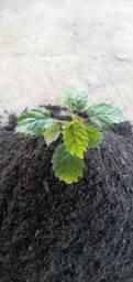 Terra vegetal  adubada para flores pacote 2kg, entrego na ceasa