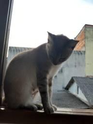 Gatos lindos para doação