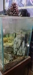 Aquario de 60cm- SOMENTE O AQUARIO