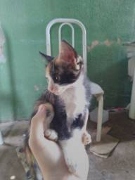 Doação de filhotes de gato. Favor ler a Descrição.