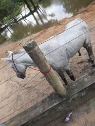 Cavalo inteiro de picado