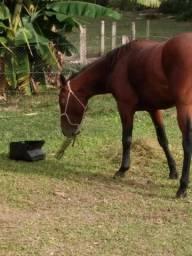 Cavalo manço em Santo Antônio