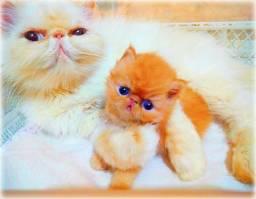 Lindo bebezinho Persa
