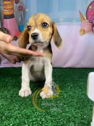 Corra e Adquira Seu Lindo Beagle