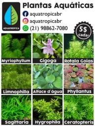 Plantas Aquáticas para Aquários e Lagos