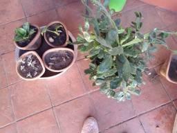 Plantinhas <3