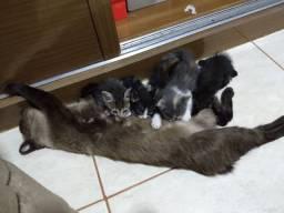 Doção de filhotes de gato (menos a mãe )