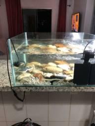 Aquario 90 lts