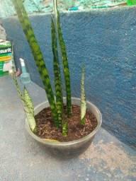 Plantas...