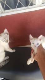 Doação 2 gatinhas