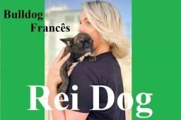 Bulldog Francês fêmea 4 meses - REI DOG