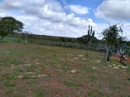 Vendo uma fazenda
