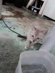 Doa-se Gatos